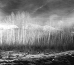 Whisper - Silver Gelatin Photography by Gwen Arkin